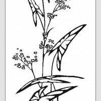 Пескоструйная обработка - Цветы, растения
